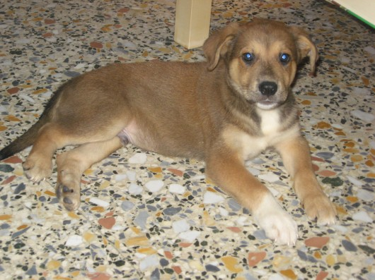Tex, il cane di Edo