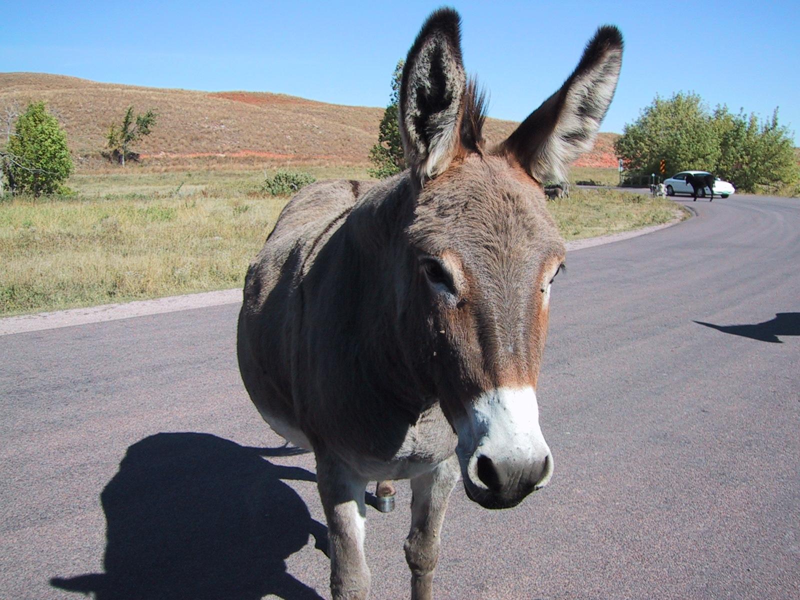 donkey-01