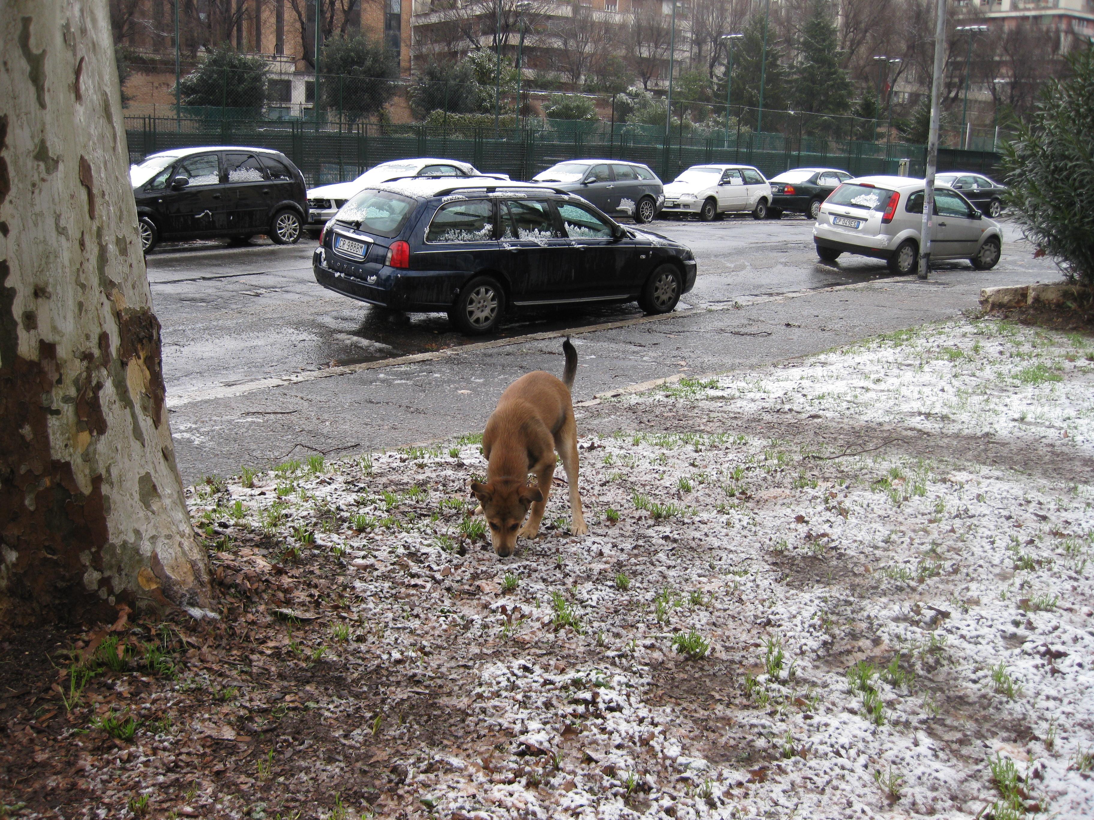 Tex e la neve