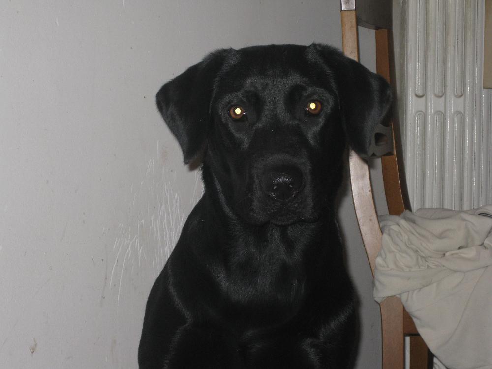 Tex, le foto