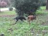 Tex e Peppa