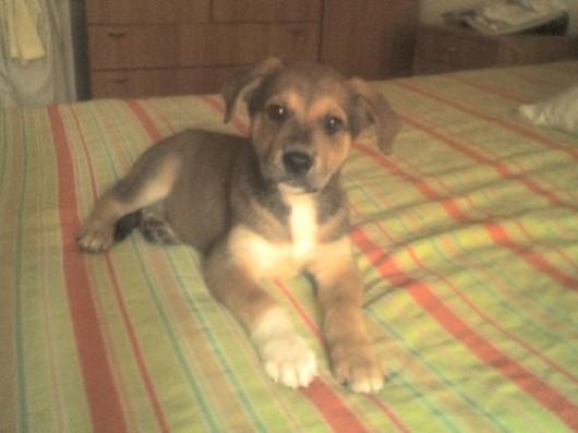 Tex a 2 mesi  - 1 Ottobre 2009