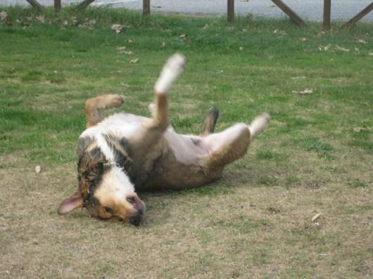 Tex si asciuga dopo il bagno al lago